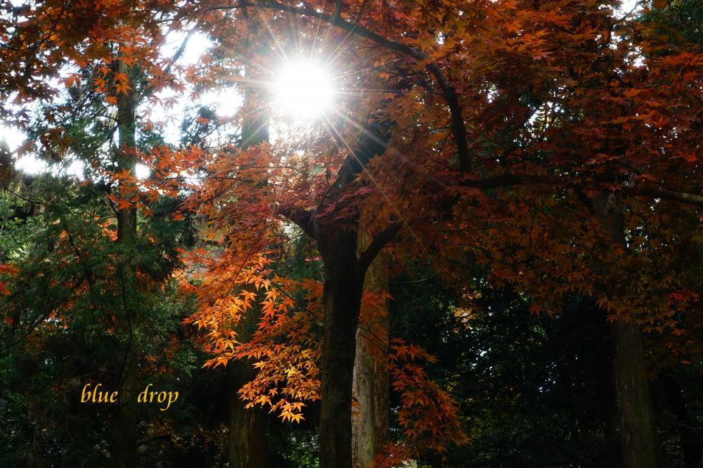 光が射した森*