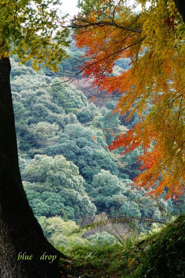 紅葉と遠景*