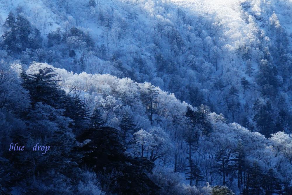 青と白の森*