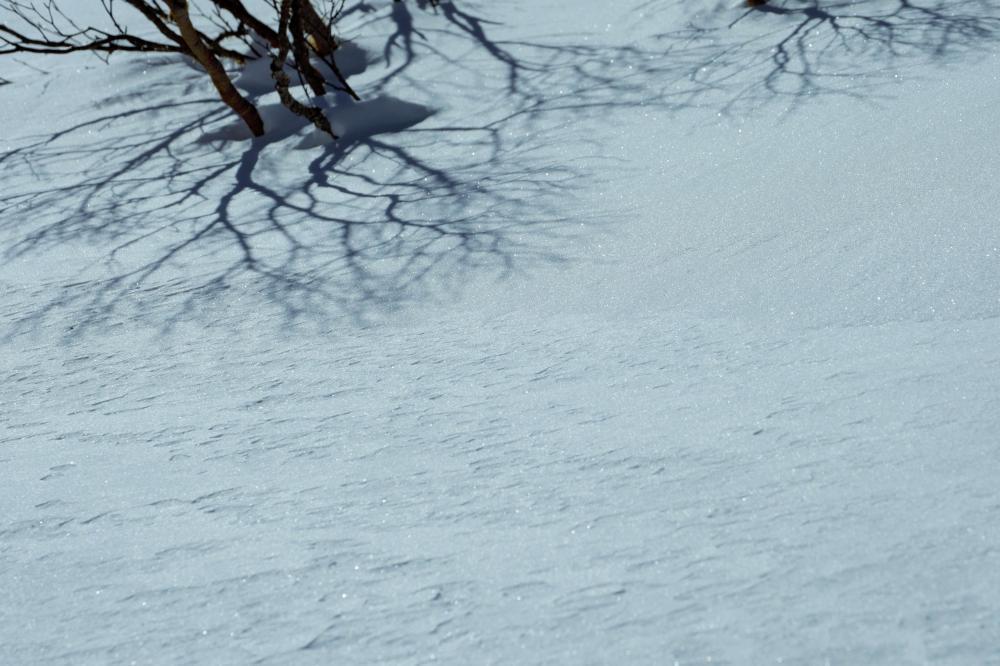 きらめきの雪面