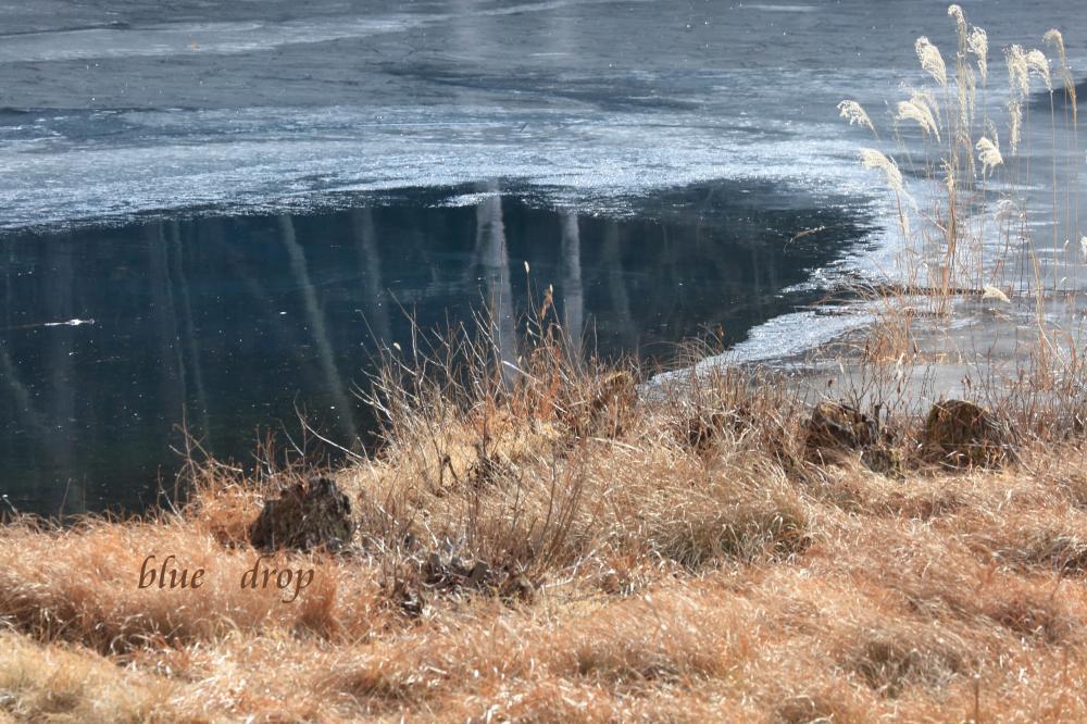 冬枯れの湖