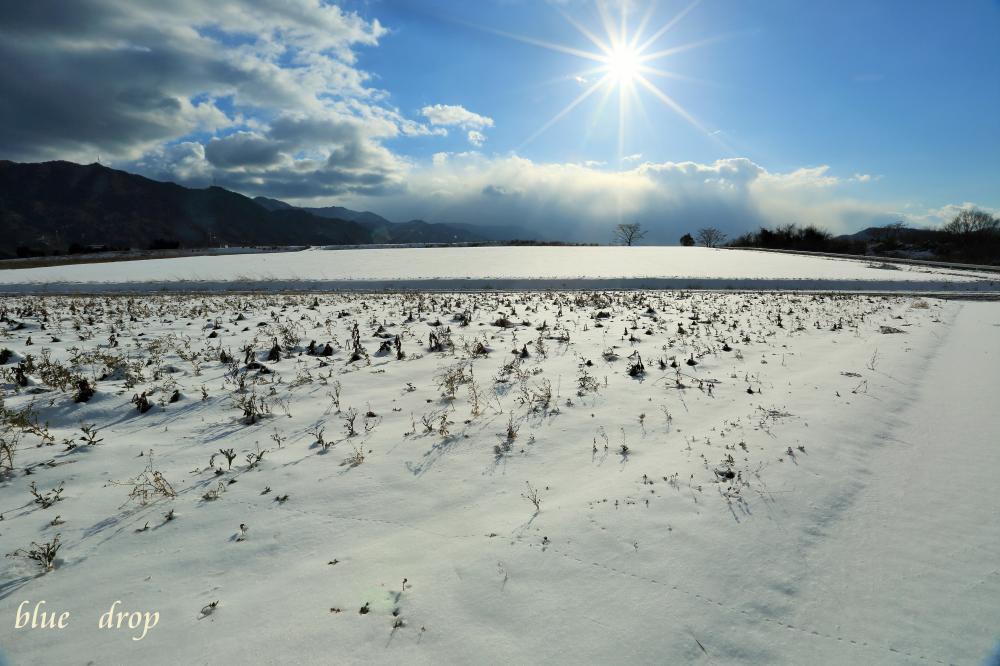ひまわり畑の雪景色