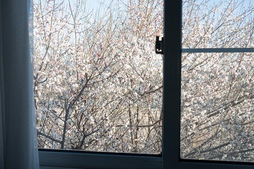 窓辺の梅-1