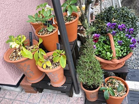 gardening368