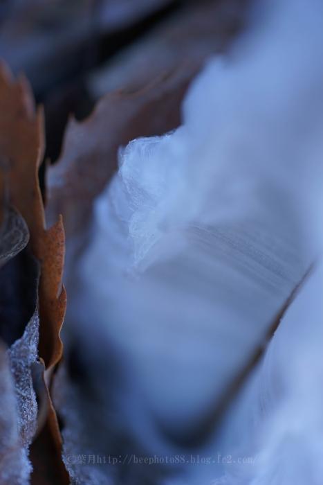 霜の花9560-2