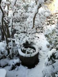 2018.01.23 初雪(翌朝)