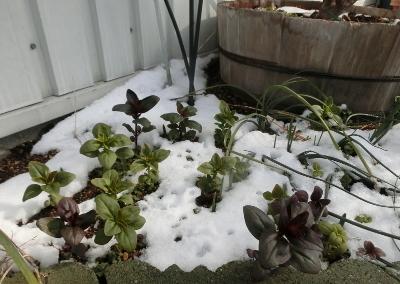 180212-雪の庭-1