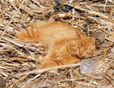 180222-野良猫さん-1
