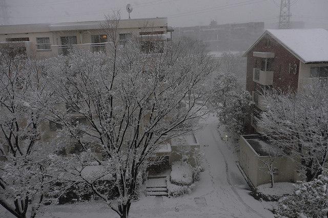 大雪001