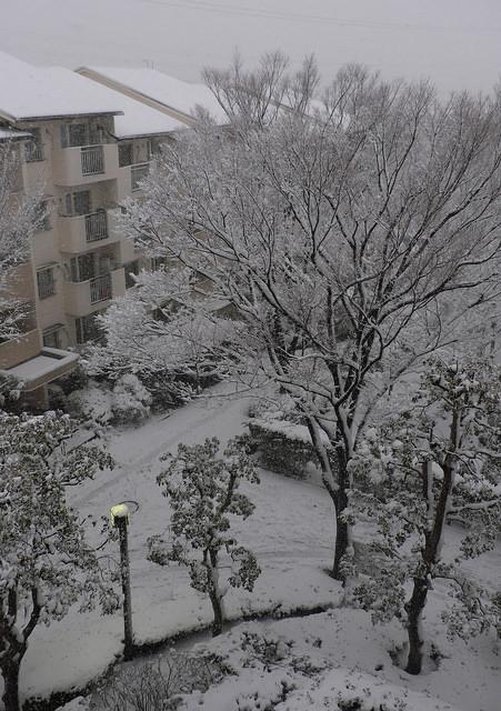 大雪002