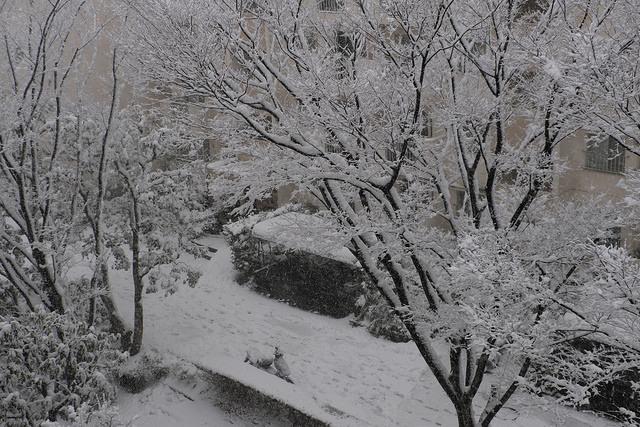 大雪003
