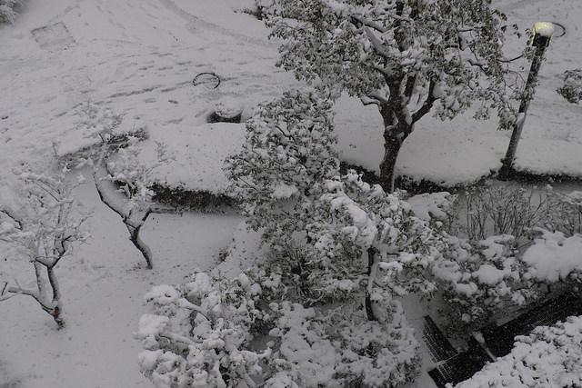 大雪004