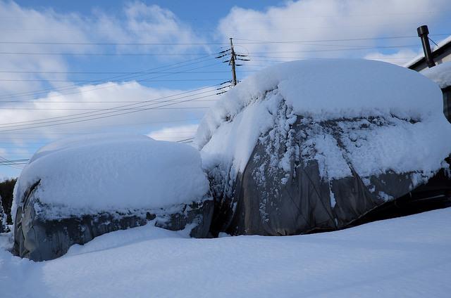 雪楽002