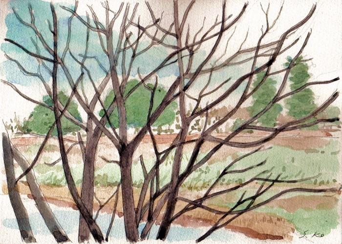 天の川早春 (700x500)