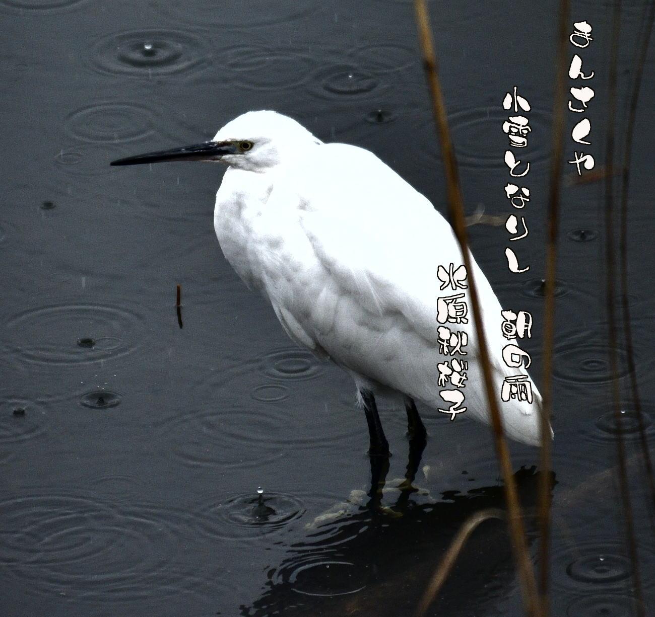 春の雨と白鷺