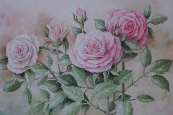 バラ 1801