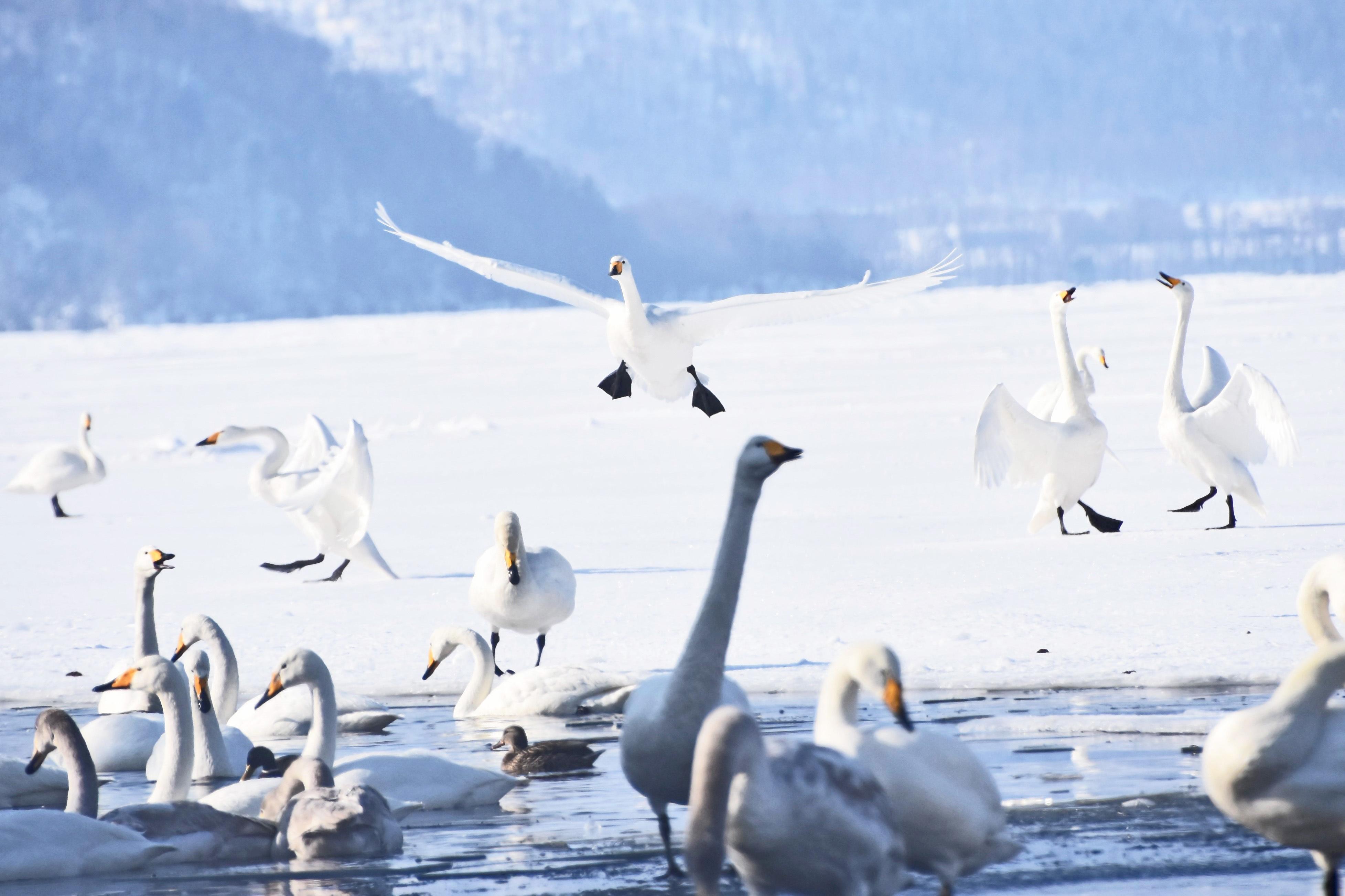 冬鳥どり♪