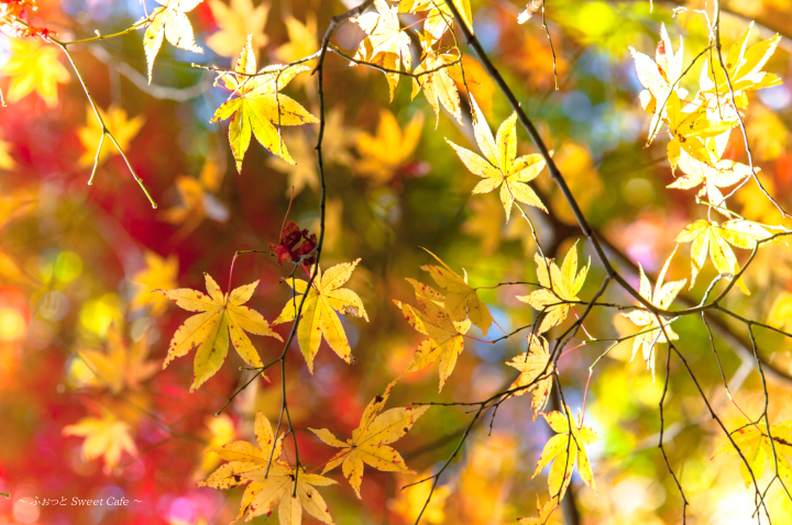 黄葉の紅葉