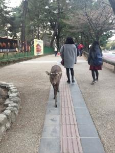 奈良県庁出張 20180222 002