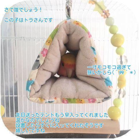 ①トラさんテント