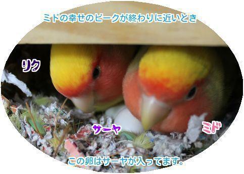 ①卵はサーヤ