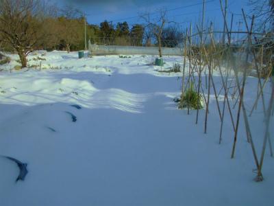 1.12雪に覆われた畑1