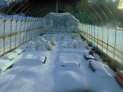 1.12雪に覆われた畑2