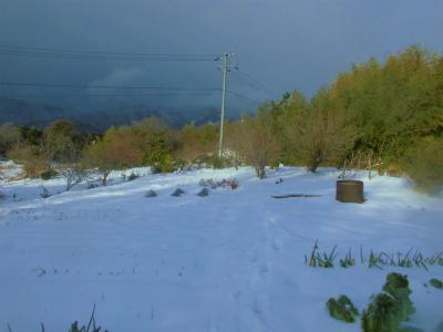 1.12雪に覆われた畑3