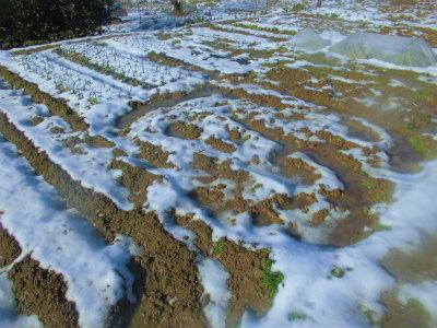 1.14畑は水浸し