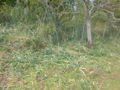 1.20笹刈り1