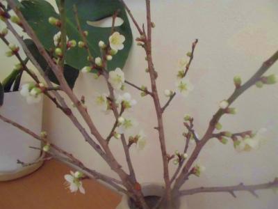 1.26梅の花