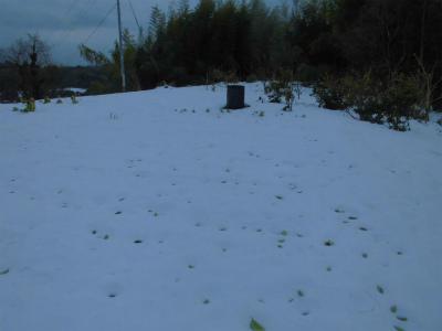 2.15雪の畑1