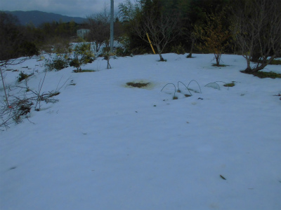 2.15雪の畑2