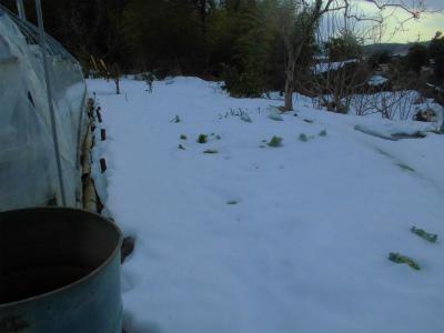 2.15雪の畑3