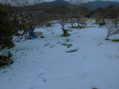 2.15雪の畑4