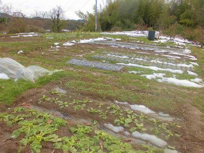 2.18雪解け水でドロドロの畑