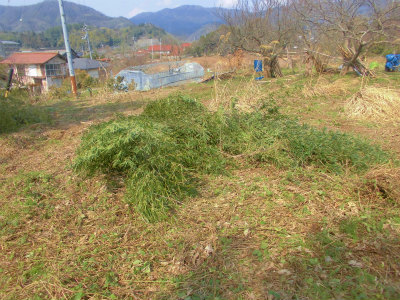 2.23小さい竹伐採
