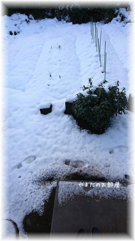 2018.1.22の雪①