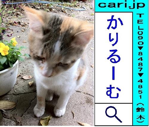moblog_b4aff937.jpg