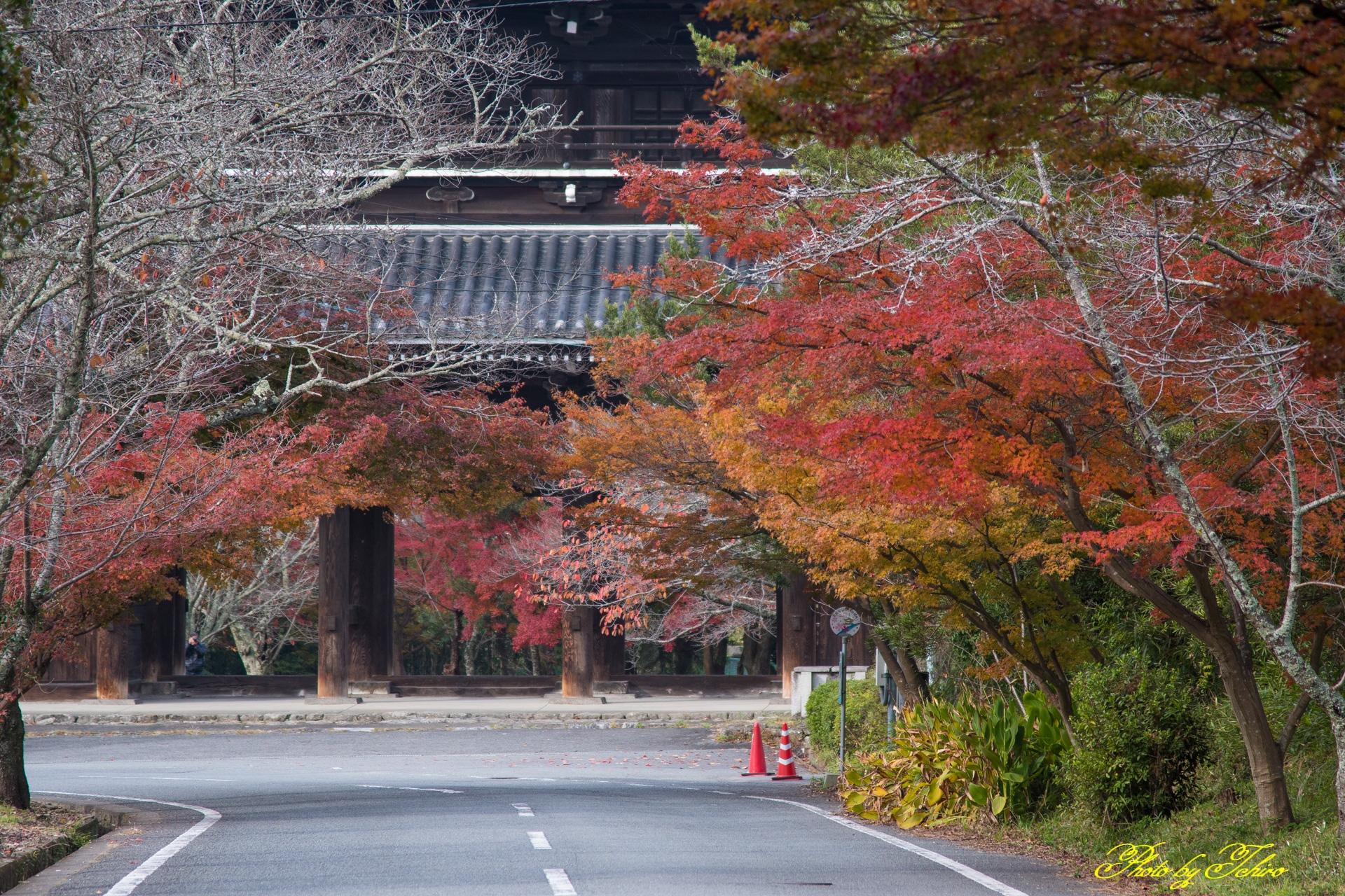 根来寺山門の紅葉