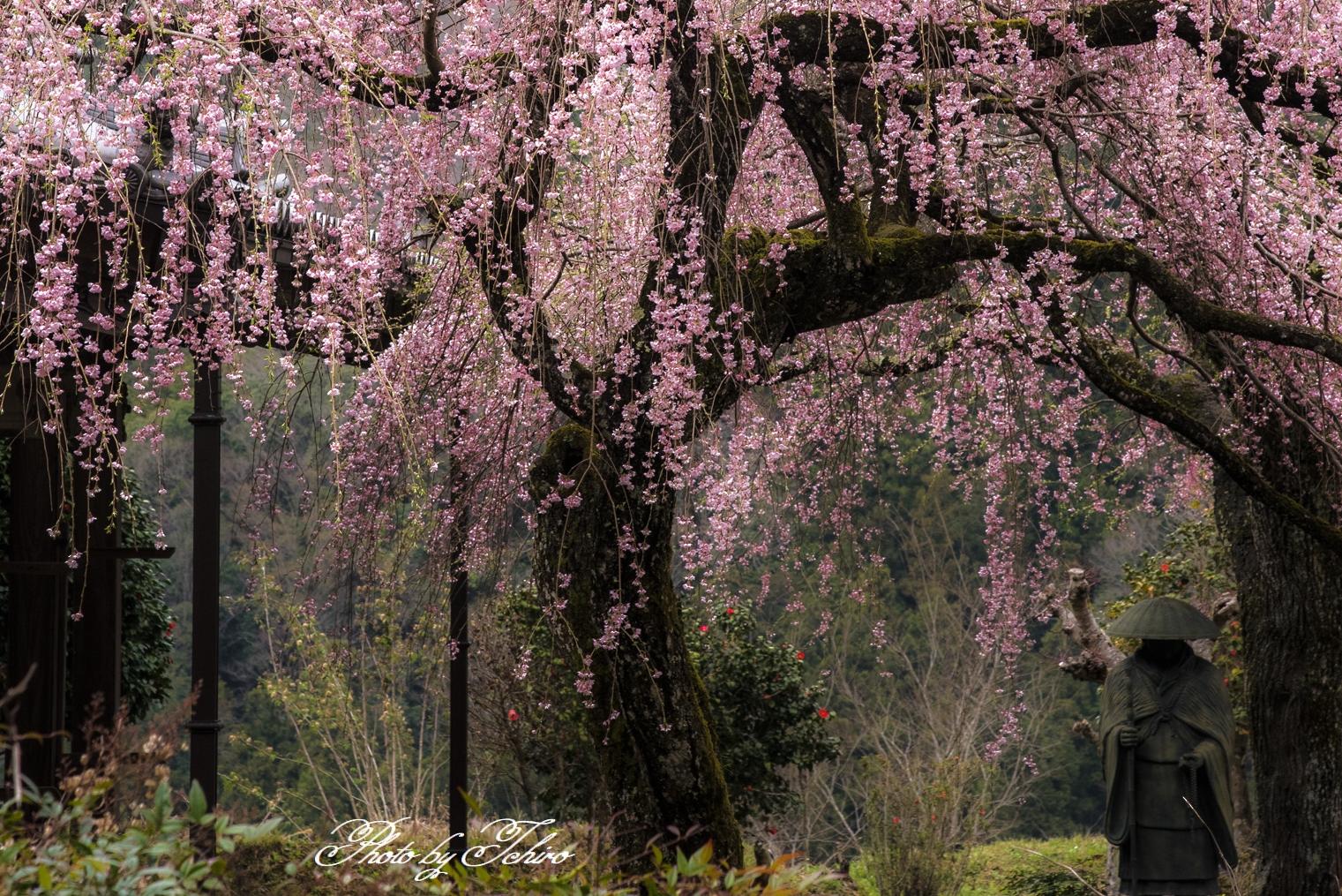奈良の古寺にひっそりと