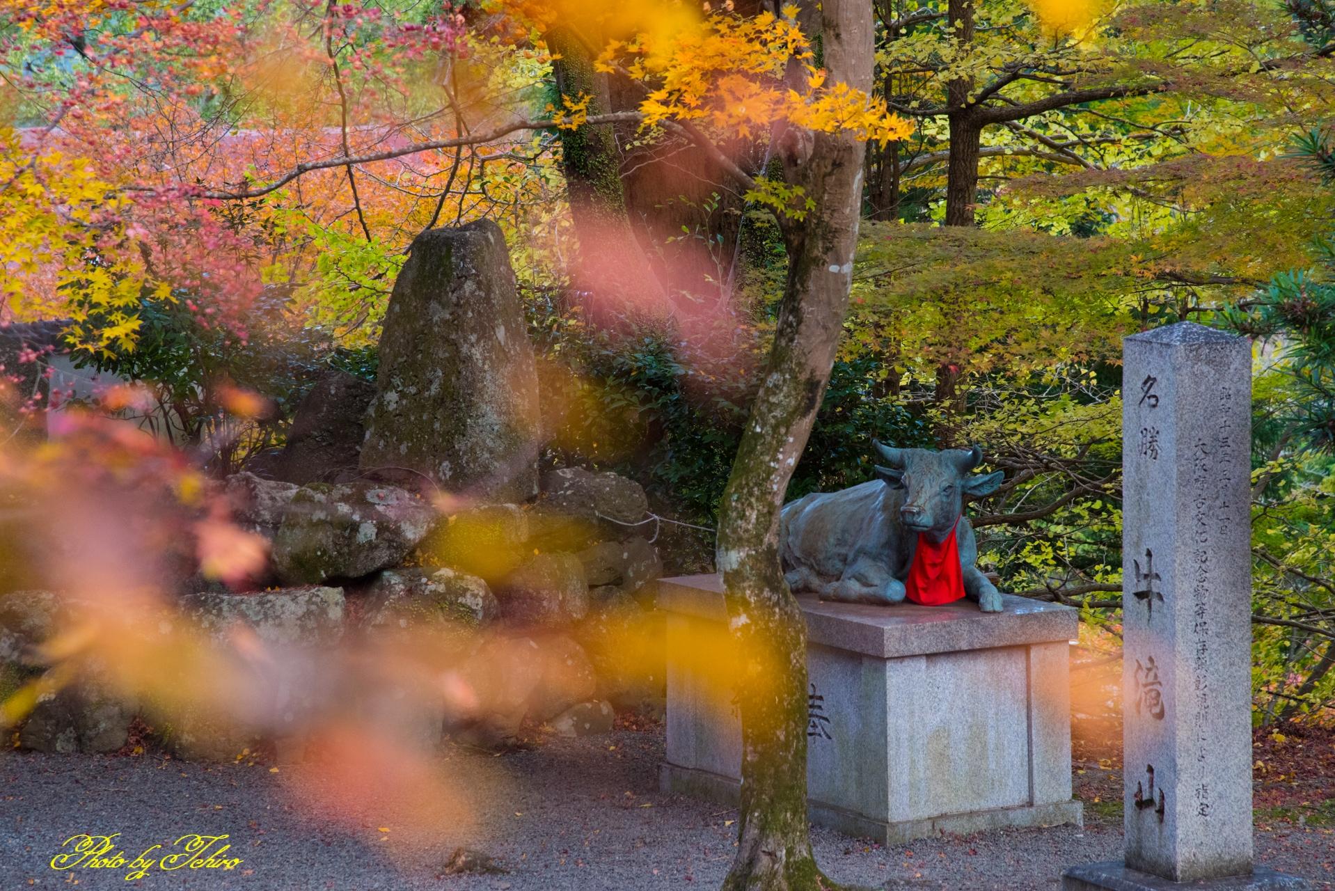 大威徳寺の紅葉