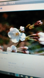 180119 桜は3.22