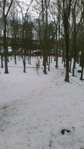 180129 多摩湖 雪が