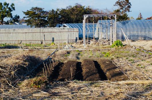 ジャガイモ畑開墾