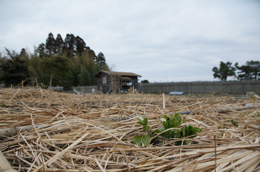 房総フィールド そら豆と小屋