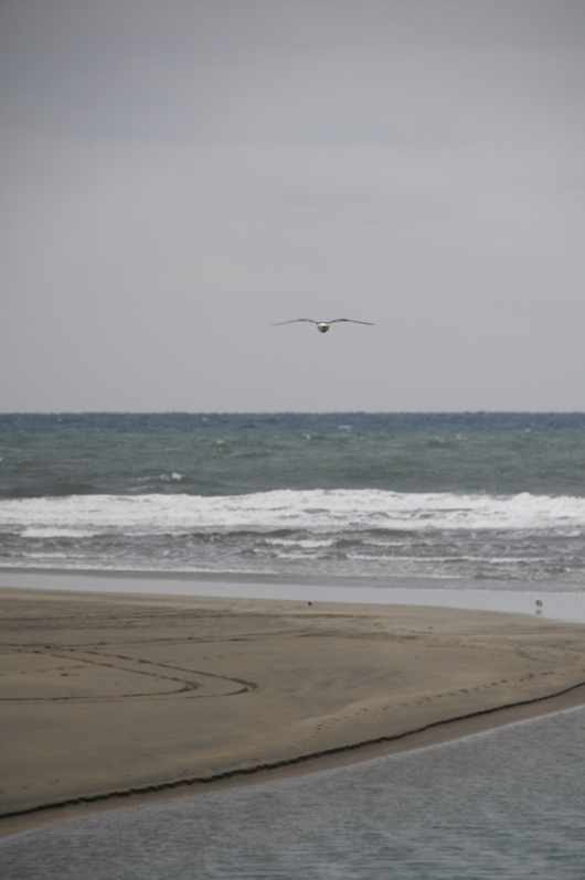 Sigma 18-250 F3.5-6.3試し撮り カモメと海