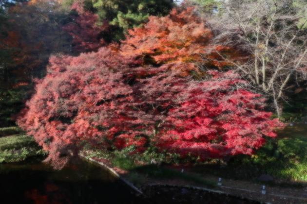 秋色2017 散歩