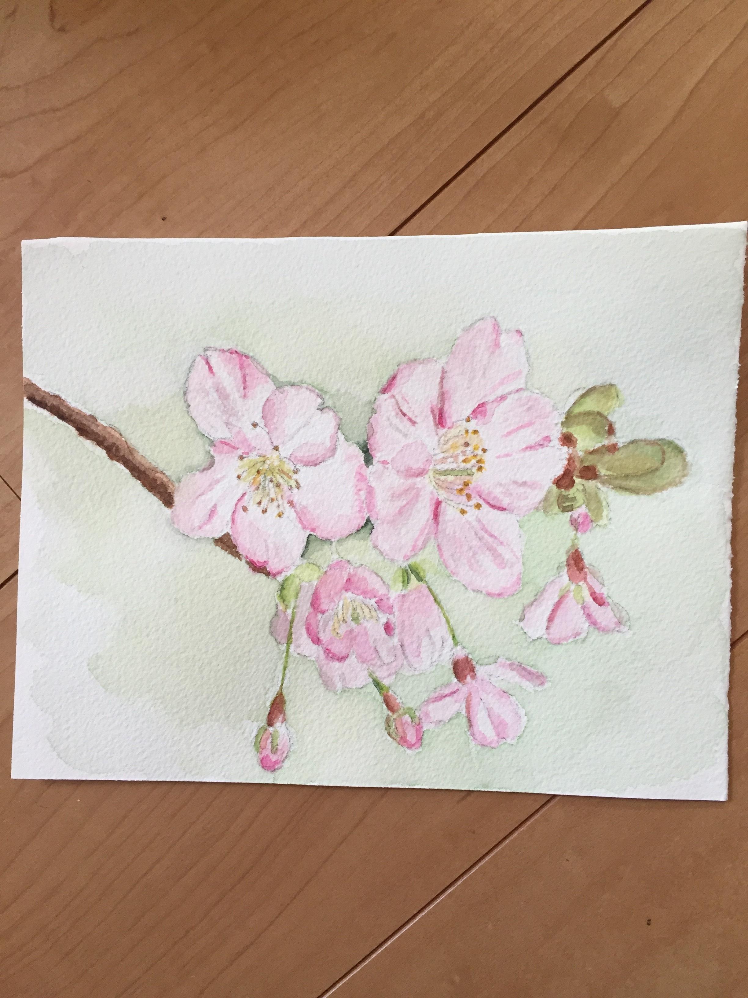 桜の水彩画