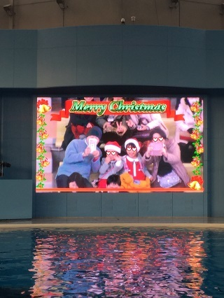 クリスマスイルカショー